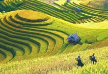 New policy to lure investment into agricultural and rural development